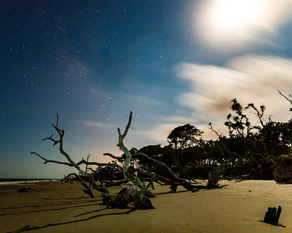 Photograph - Milky Way Above Driftwood by Chris Bordeleau