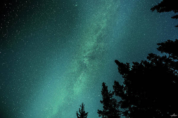 Photograph - Milky Way Above The Trees by Philip Rispin