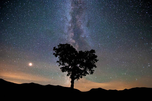 Milky Way Wall Art - Photograph - Milky Way, Mars And Heart Tree by Chris Whiton