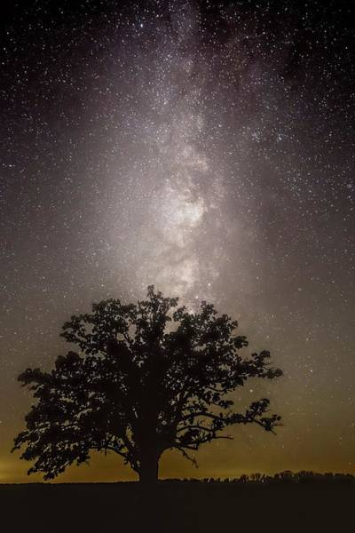 Photograph - Milky Way Over Mcbaine Oak  by Harold Rau