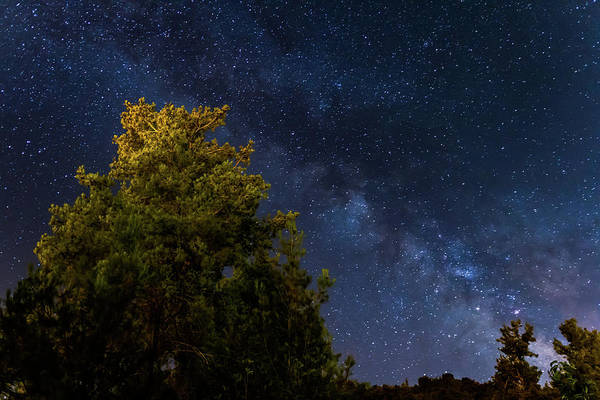 Nature Wall Art - Photograph - Milky Way Over The Forest At The Troodos Mountains In Cyprus. by Iordanis Pallikaras