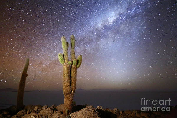 Photograph - Milky Way Zodiacal Light And Echinopsis Cacti Incahuasi Island Bolivia by James Brunker