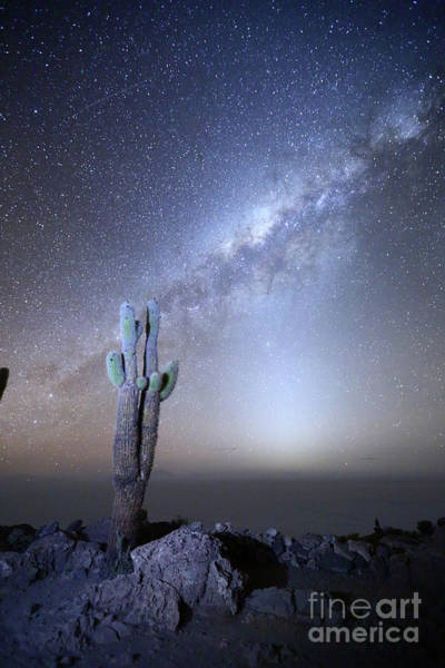 Photograph - Milky Way Zodiacal Light And Giant Cactus Incahuasi Island Bolivia by James Brunker