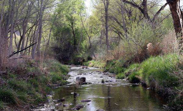 Photograph - Mill Creek In Spring  by Christy Pooschke