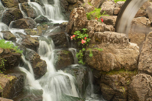 Photograph - Mill Wheel With Waterfall by David Coblitz
