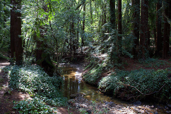 Photograph - Miller Grove In Mill Valley #1 by Ben Upham III