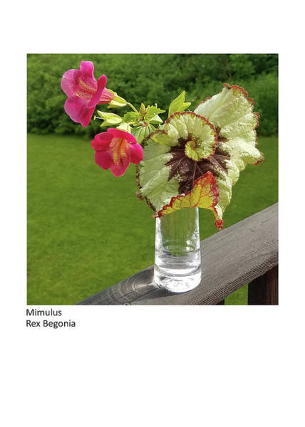 Photograph - Mimulus, Rex Begonia by Betsy Derrick
