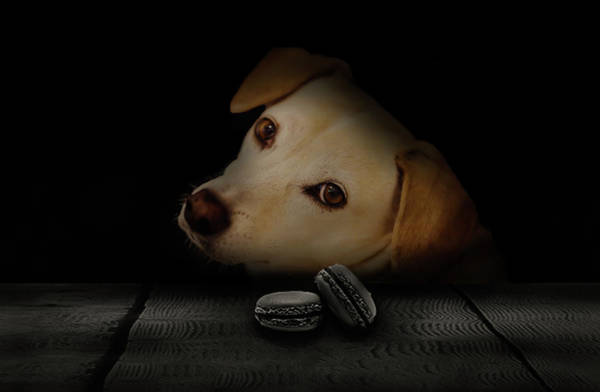 Dog Biscuit Photograph - Mine by Phil Pace