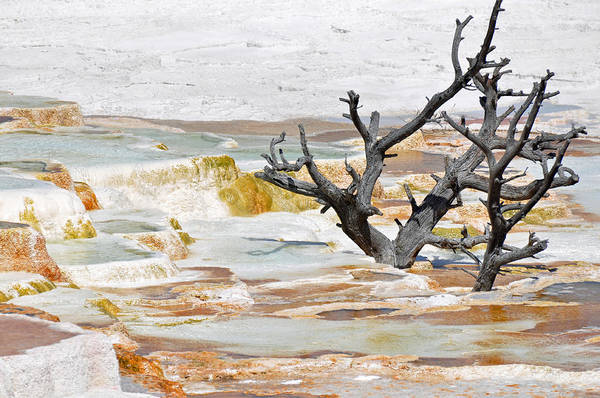 Photograph - Mineralized Tree by Bruce Gourley