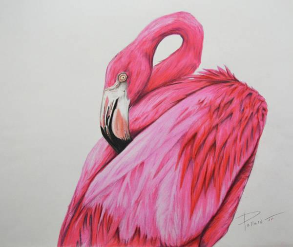 Flamingo Drawing - Mingo by William Pullaro Jr