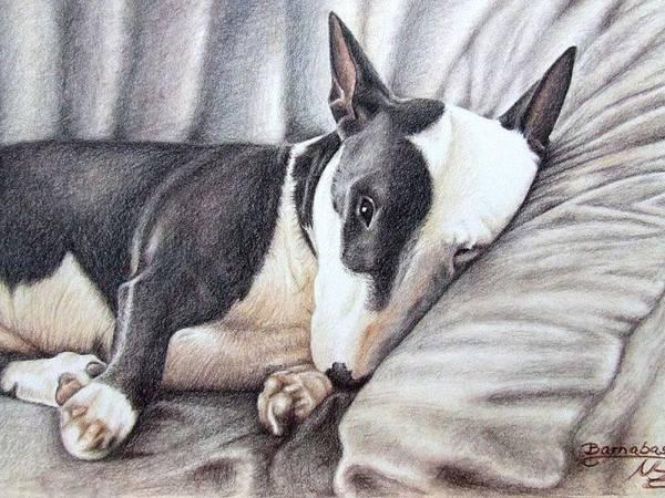 Hund Drawing - Mini Bulldog Terrier by Nicole Zeug