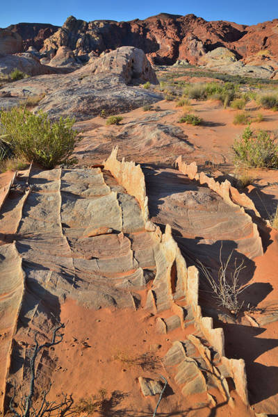 Photograph - Miniature Fins Of Sandstone In Valley Of Fire by Ray Mathis