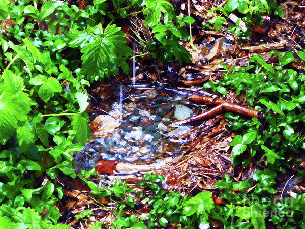 Little Things Photograph - Miniature Pond In Watercolor by As the Dinosaur Flies Photography