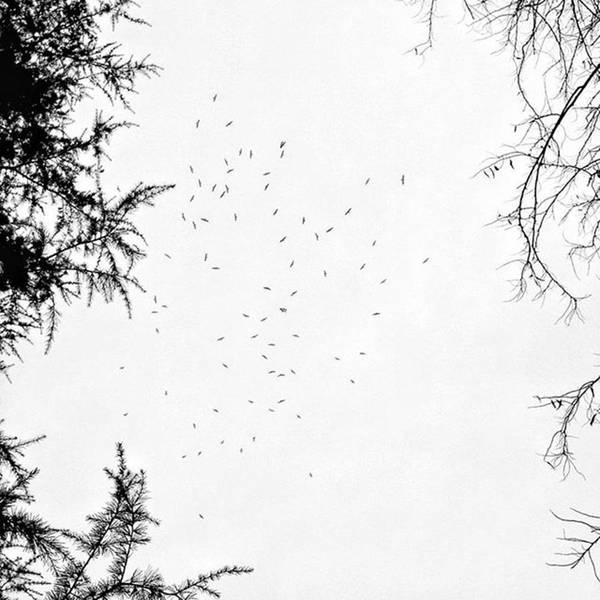 Wall Art - Photograph - Minimal Meeting #sky #skylovers #trees by Rafa Rivas