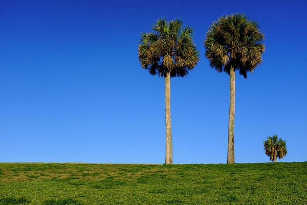 Minimal Palm Trees On A Hill In Saint Augustine Florida Art Print
