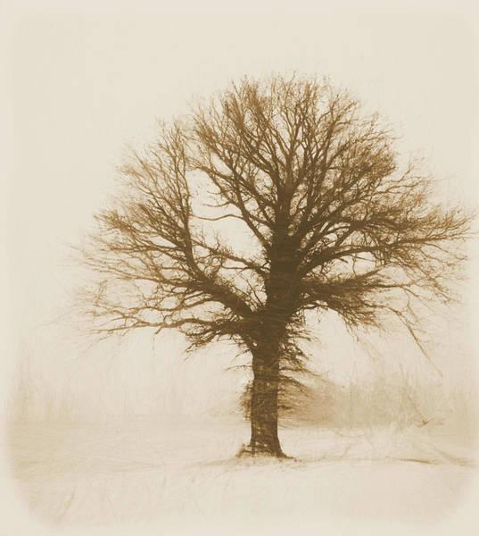 Wall Art - Mixed Media - Minimal Winter Tree by Dan Sproul