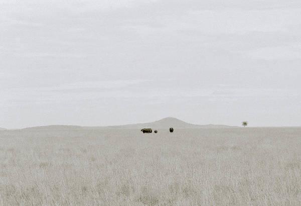 Photograph - Minimalism Of Nature by Shaun Higson