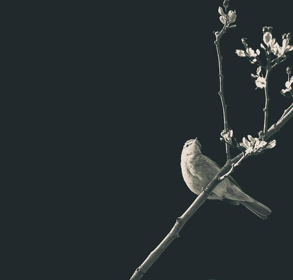 Wall Art - Photograph - Minimalist Bird by Martin Newman