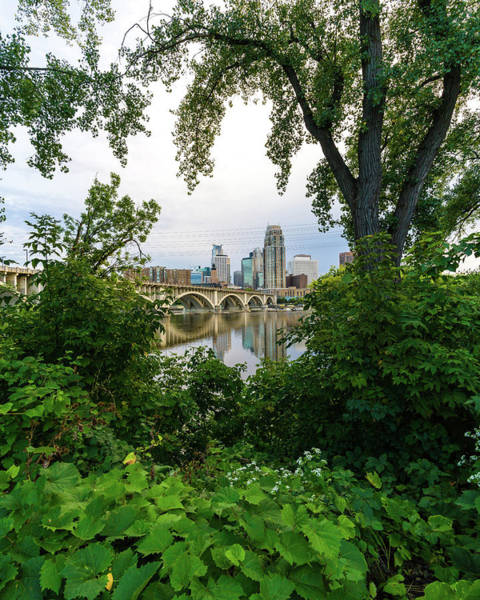 Photograph - Minneapolis Through The Trees by Mike Evangelist