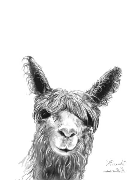 Llama Drawing - Miranda by K Llamas