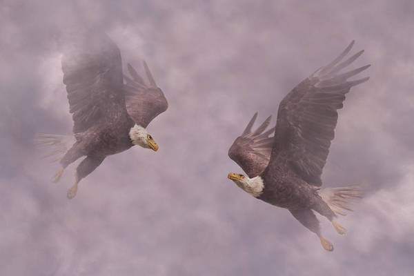 Flying Eagle Photograph - Mirror Eagles by Betsy Knapp