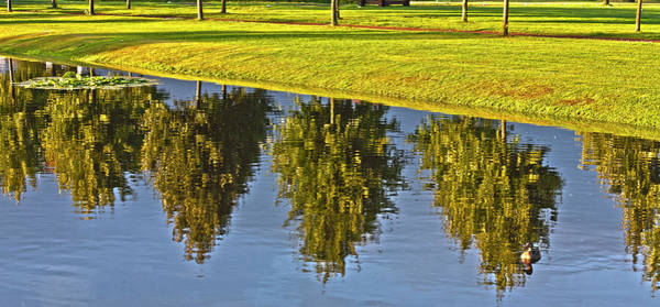 Photograph - Mirroring Trees by Heiko Koehrer-Wagner