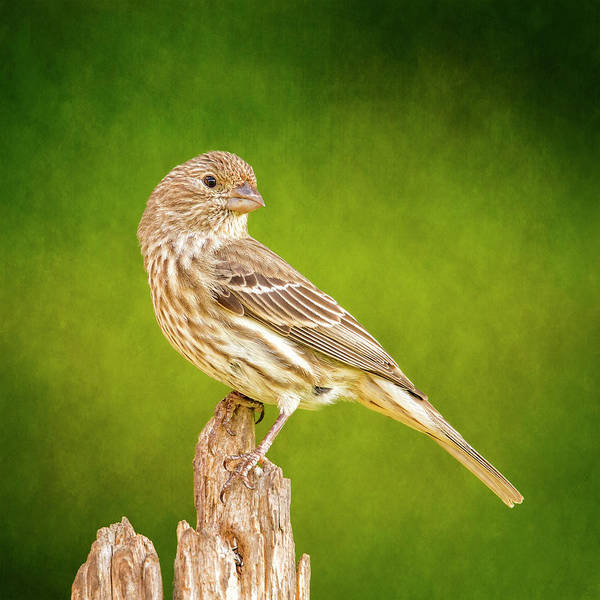 Wall Art - Photograph - Miss Finch Strikes A Pose On Green by Bill Tiepelman