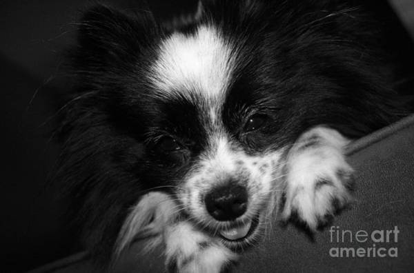 Hair Of The Dog Wall Art - Photograph - Miss Gypsy by Kelly Holm