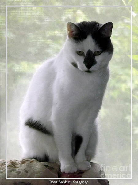 Photograph - Miss Jerrie Cat With Watercolor Effect by Rose Santuci-Sofranko