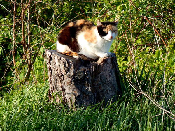 Photograph - Miss Kitty Stump by Wild Thing
