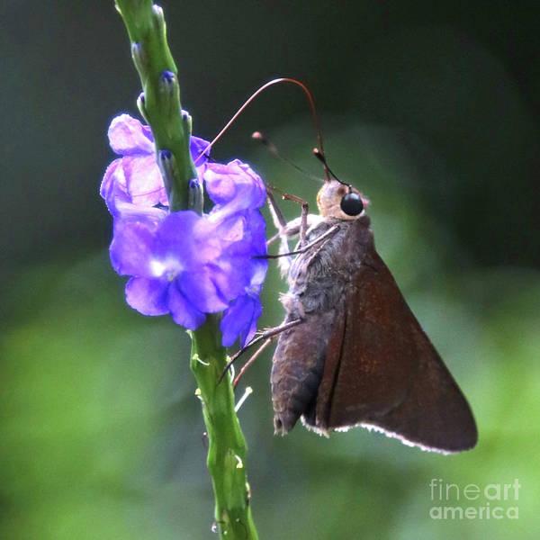 Photograph - Miss Moth by Carol Groenen
