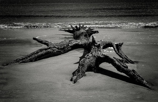Wall Art - Photograph - Misshapen Monster Returning To The Deep?? by Andrew Wilson