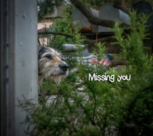 Photograph - Missing You  by Bill Posner