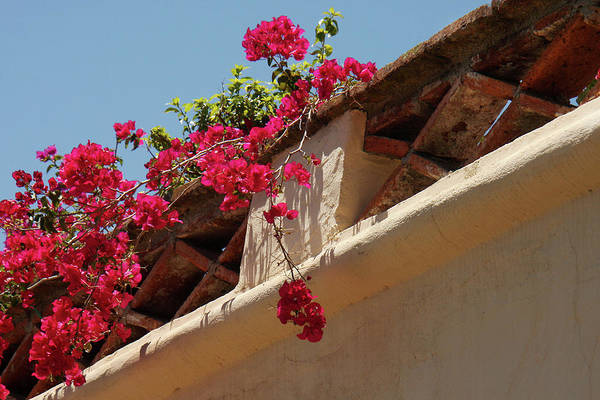 Solvang Photograph - Mission Bougainvillea by Art Block Collections