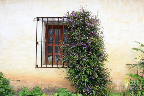 Photograph - Mission Window With Purple Flowers by Carol Groenen