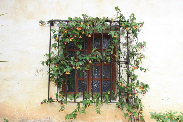 Carmel Mission Photograph - Mission Window With Yellow Flowers by Carol Groenen