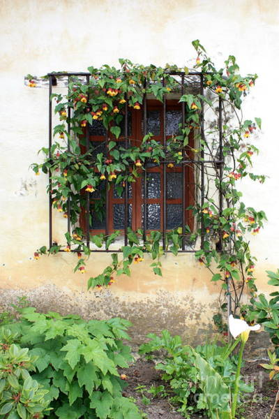 Carmel Mission Photograph - Mission Window With Yellow Flowers Vertical by Carol Groenen