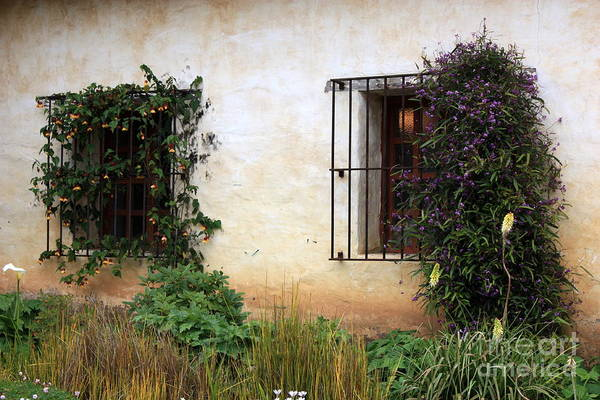 Carmel Mission Photograph - Mission Windows by Carol Groenen