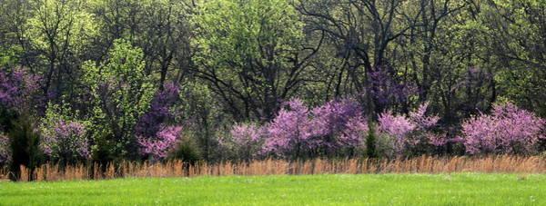 Photograph - Missouri Redbuds 4 by David Dunham