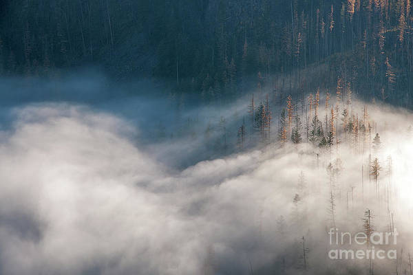 Photograph - Mist And Shadow by David Emond