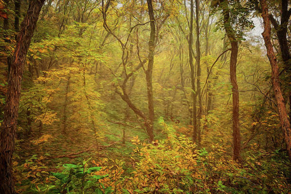 Photograph - Mist In The Woods #2 by Susan Rissi Tregoning