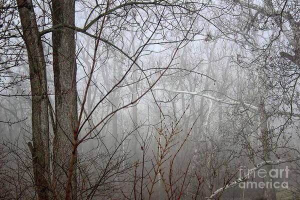 Photograph - Mist Of Morning by Karen Adams