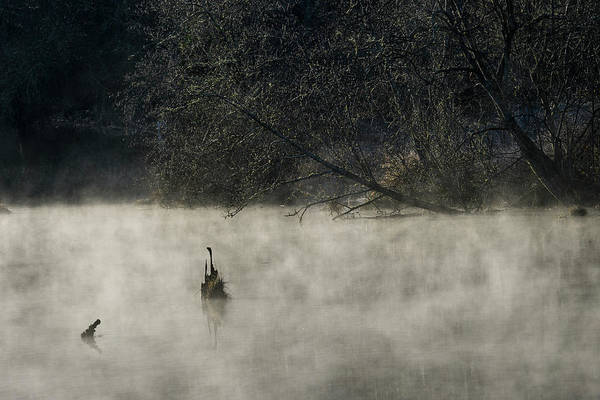 Photograph - Mist On The River by Robert Potts