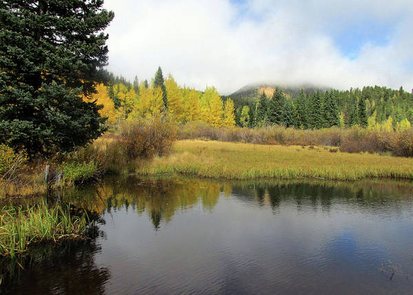 Photograph - Mist Rising Above Golden Aspens Reflected In A Pond by Julia L Wright