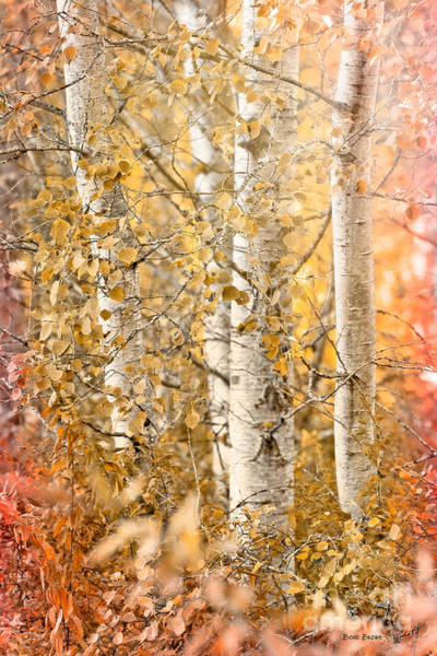 Photograph - Misted by Beve Brown-Clark Photography