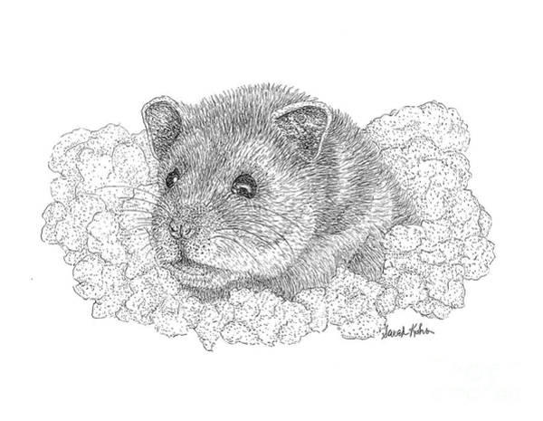 Hamster Drawing - Mister Boov by Sarah Kuhn