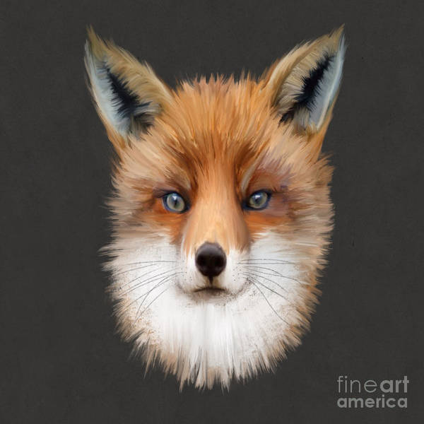 Furry Digital Art - Mister Fox by John Edwards