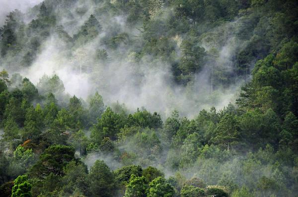 Photograph - Mistico De San Jose De Pacifico by Skip Hunt
