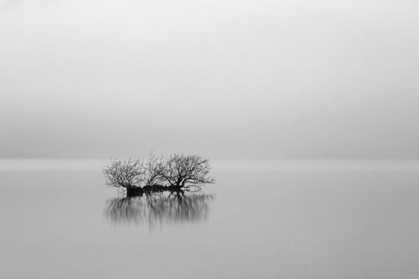 Photograph - Misty Bush by Grant Glendinning