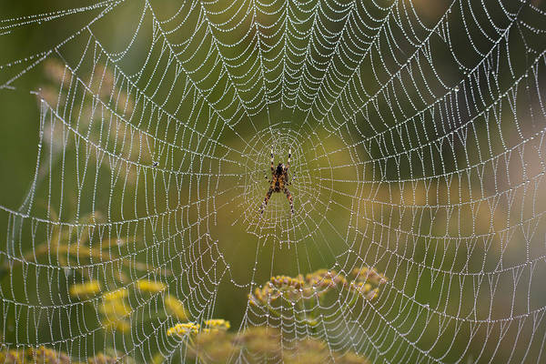 Photograph - Misty Dewdrop Web by Clare Bambers